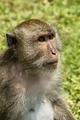 opica v zamyslení...