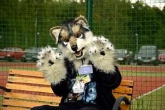 Vlk na lavicke