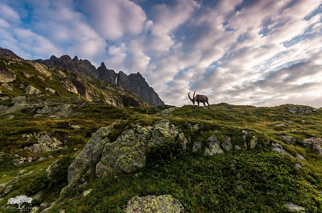 Wild life at Mont Blanc
