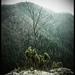 Opustený strom