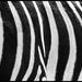 černe biele černe biele černe bi