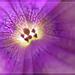 Neviem aký kvet 2