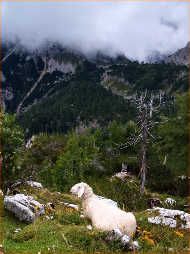 O horách a ovcích
