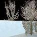 Zima námraza a moja záhrada