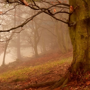 V čarovnom lese... 2