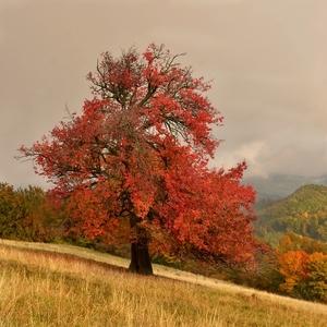 Stromy to sú z dreva básne...1