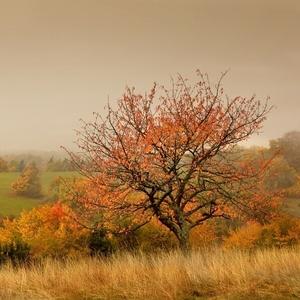 Stromy to sú z dreva básne...4