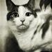 hypnotic cat 2