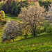 keď stromy kvitli