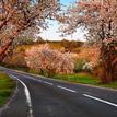 keď stromy kvitli..