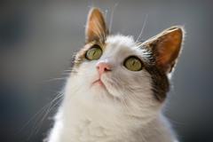 mačko-portrét
