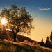 slnko a strom