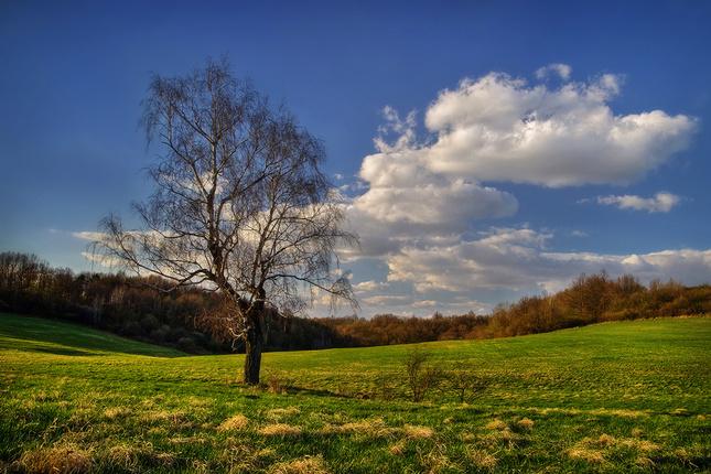 lúka a strom..