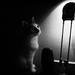 mačka a svetlo