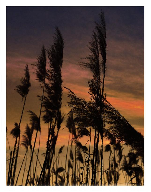 Západ slnka uväznený v trstinach