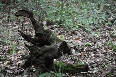 strom alebo zviera?