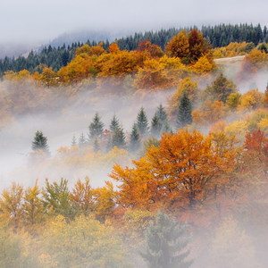 Jesenná paleta