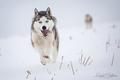 Prvý sneh :)