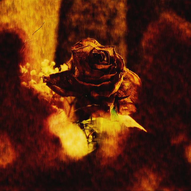 ...burn flower...