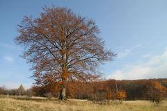 jesenný i