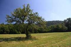 jablonka (od vyhní)