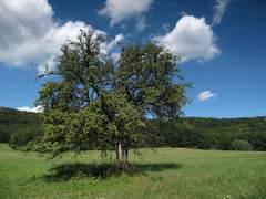 jablonka (od dobrej vody)