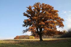 jesenný iv