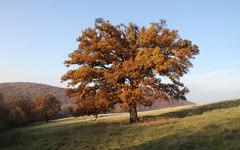 jesenný iii