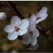 Jarná flóra