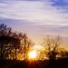 slnko v náručí stromov