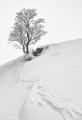 v snehu na skale