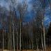 Cesta pri lese