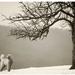Pes a jeho strom