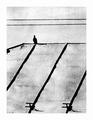holubie výhľady II