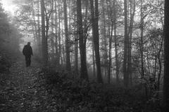Zahmlený les