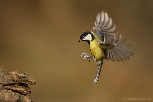 GRT landing