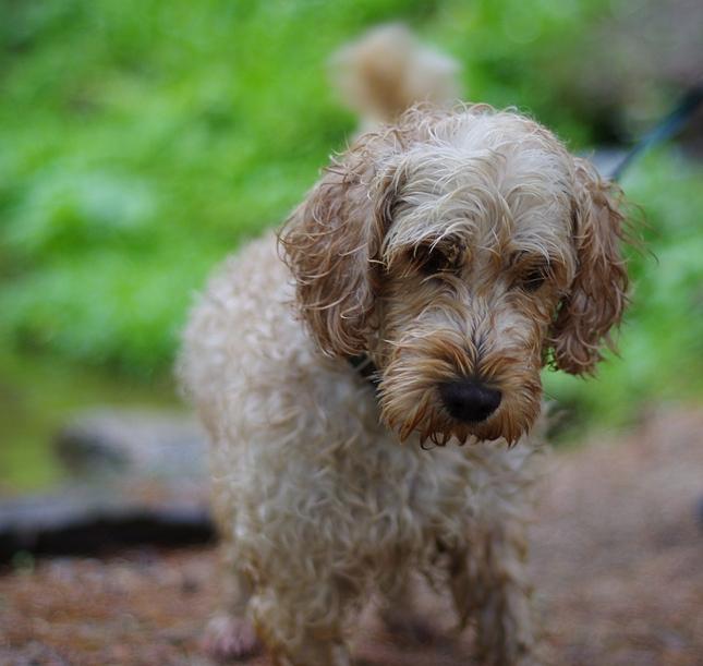 Najfotografovanejší pes 2