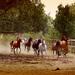 Na ranči