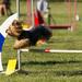 Majstrovstvá SR v agility