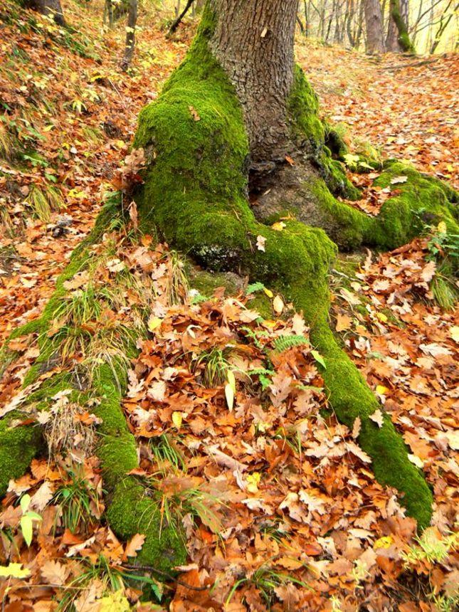 Les na jeseň