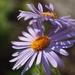 obycajne kvety