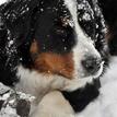 môj prvý sneh