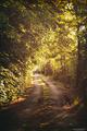 slnecna cesta