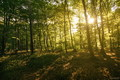 svetlou lesnou cestou