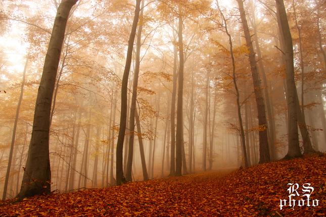 Jesenná hmla