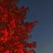 Jeseň v noci