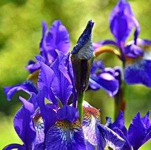 Kvetinkovo 2.