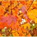 Jesenná 2