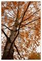 Jesenná 3