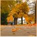 Jesenná 1